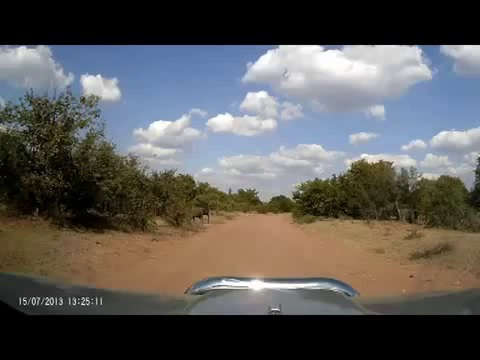 Beautiful elephants caught on dashcam