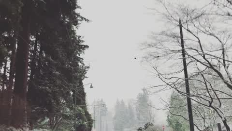Driving through a snowy Stanley Park, Vancouver BC